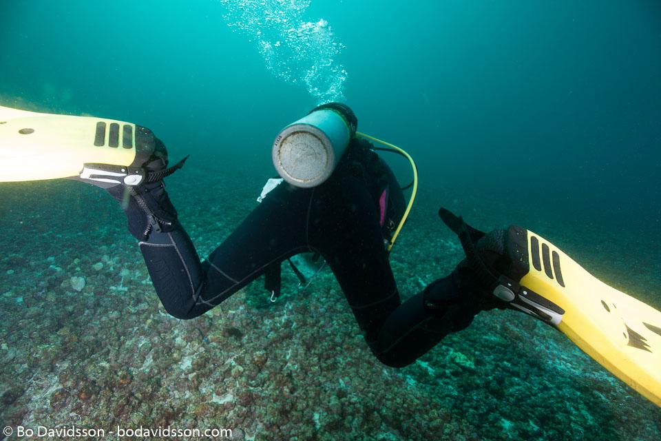 BD-141011-Komodo-4306-Homo-sapiens.-Linnaeus.-1758-[Diver].jpg